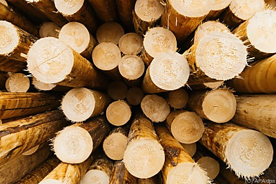 Kritik an Holz-Verstromung  - Hausach, APA/dpa