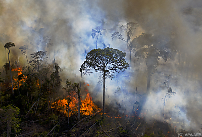 Zunehmende Zerstörung des Waldes durch Brände und Holzfäller  - Novo Progresso, APA/AFP