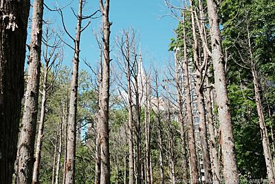 Auch die Wälder sind gefährdet - New York, APA/GETTY IMAGES NORTH AMERICA