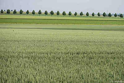Landwirtschaft wurde nicht sauberer  - Warberg, APA/dpa