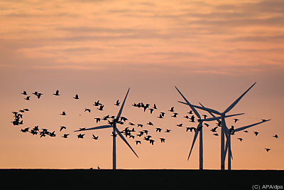 Windkraft stabilisiert Strompreis  - Schlüttsiel, APA/dpa