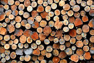 Piezoelektrische Leistung von Holz um das 55-Fache erhöhte  - Kirnberg, APA